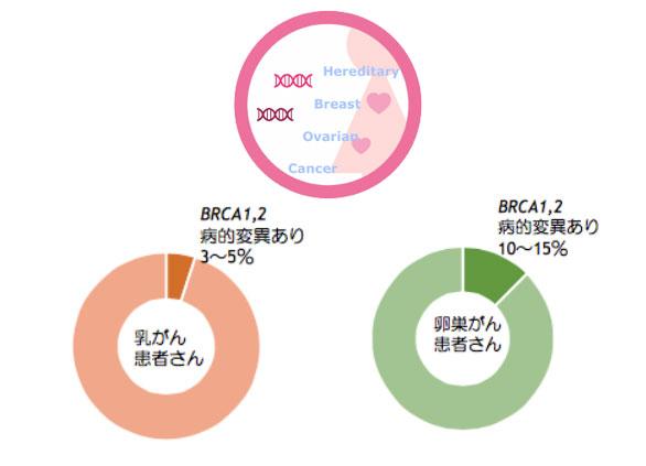 遺伝性乳がん卵巣がん症候群のご相談について